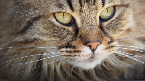6 Facts About Cat Whiskers
