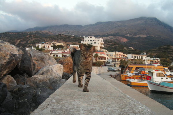 Cat in Greece