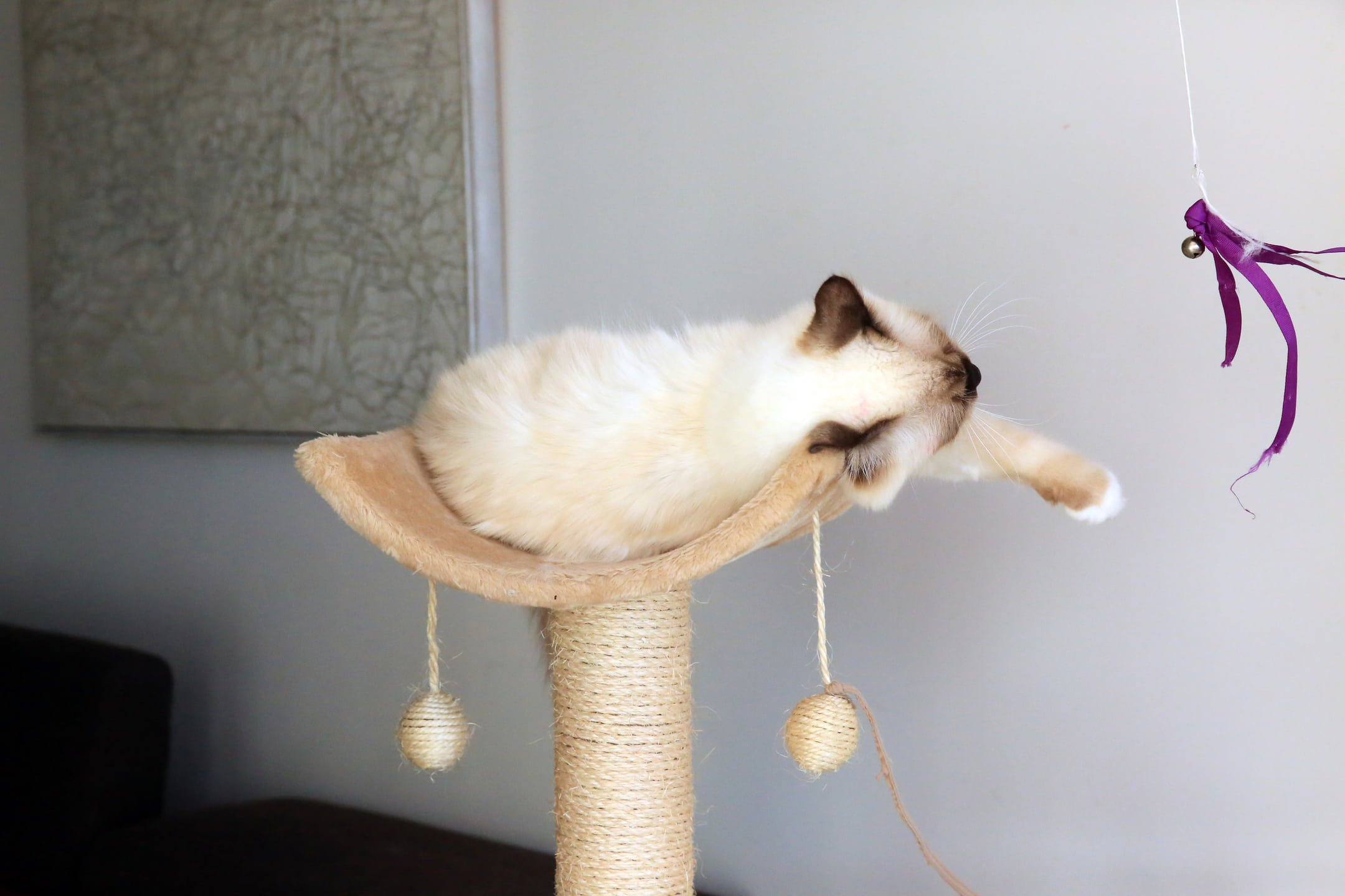 Keeping an Indoor Cat Happy - Purrfect Love