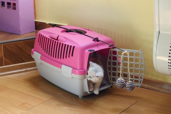 Kitten in carrier