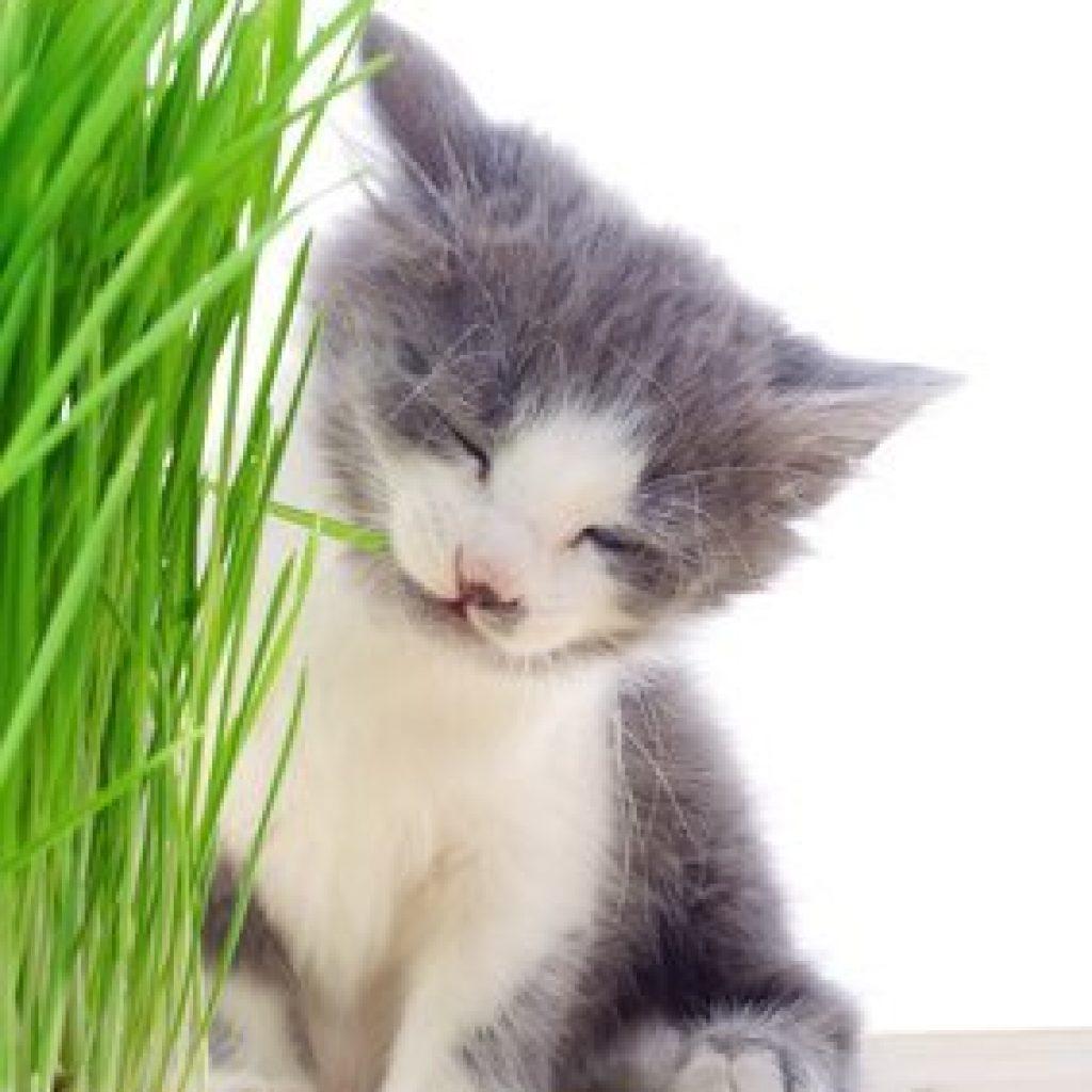 kitten with grass