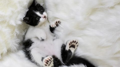 10 Facts About Polydactyl Cats