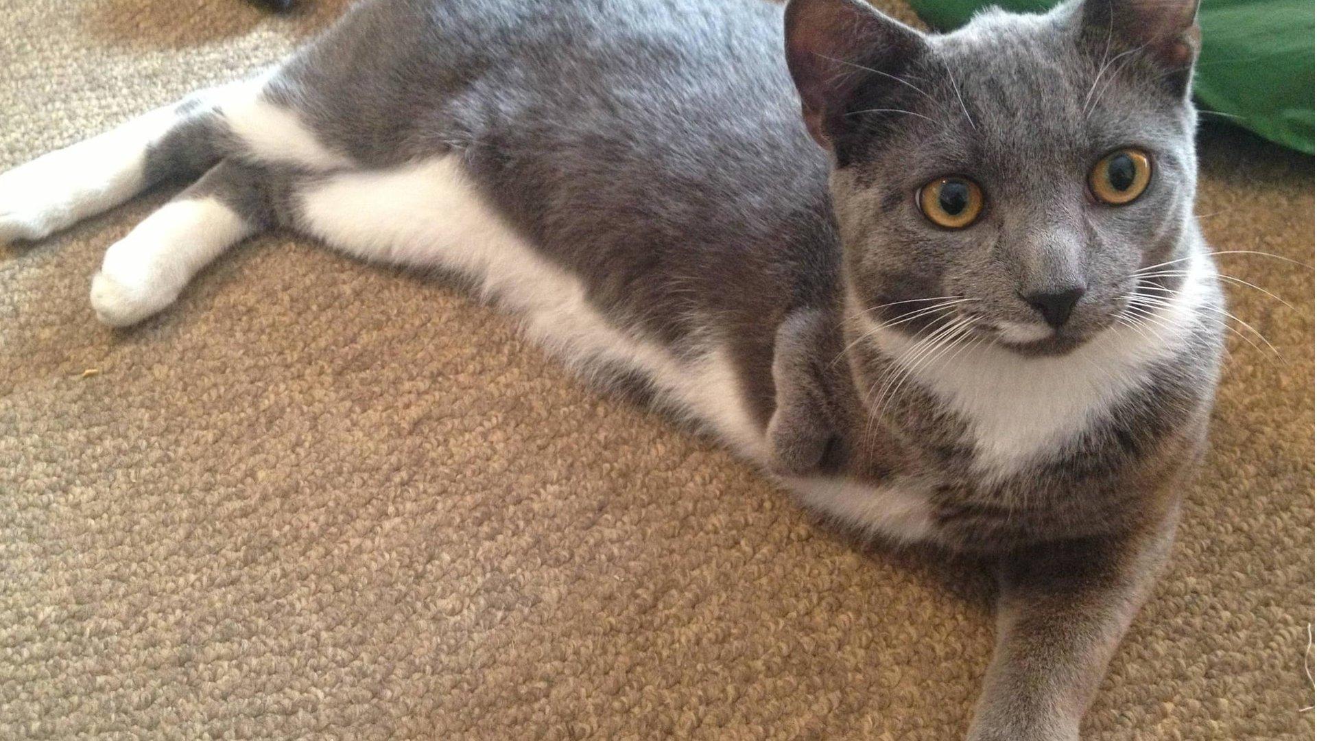 Tripod Cat