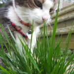 Joey sniffing grass
