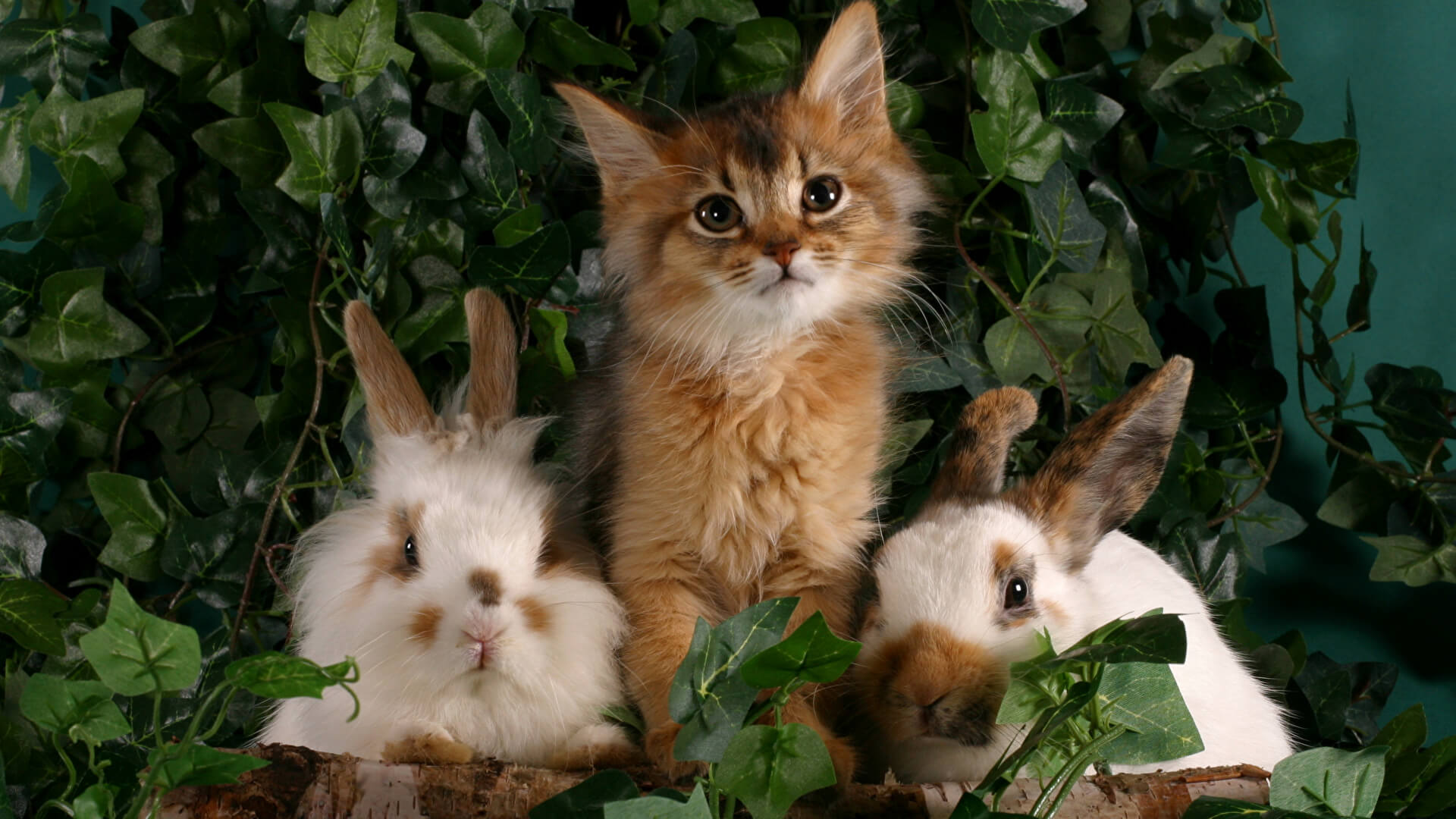 Cat and rabbits