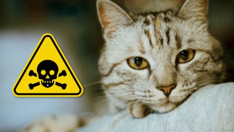 What to Do if My Cat Ate Rat Poison?