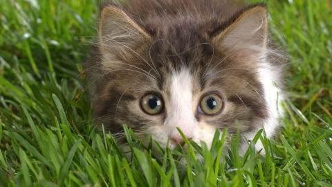 14 Home Remedies for Cats
