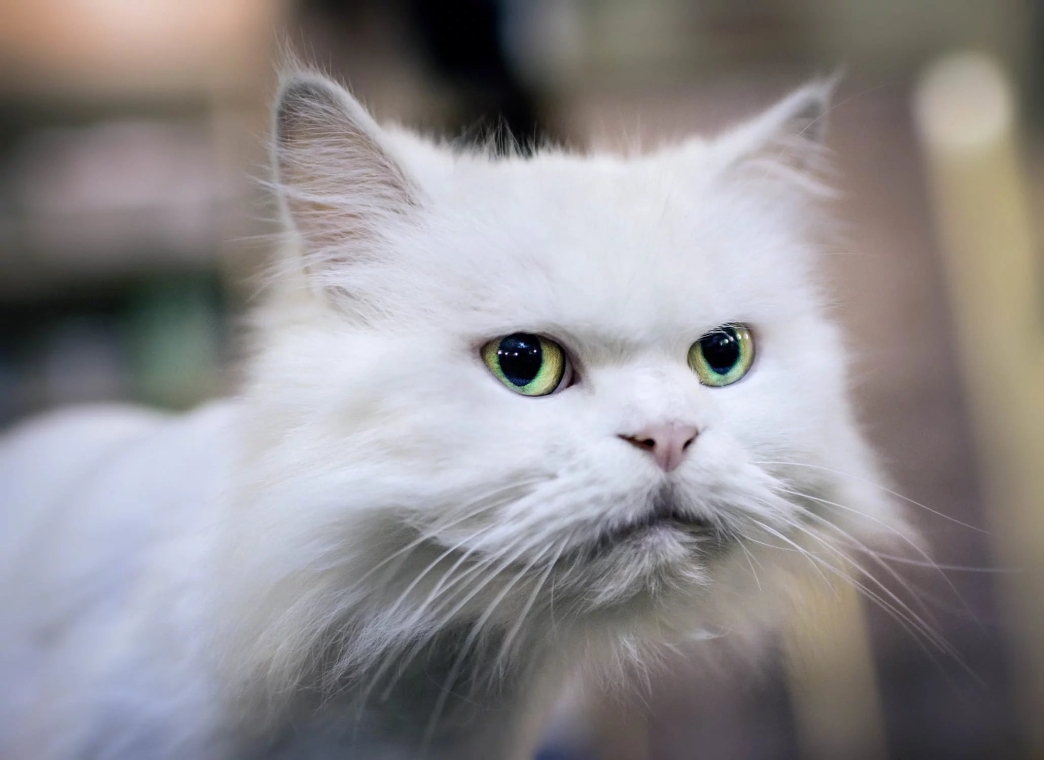 Bipolar cat