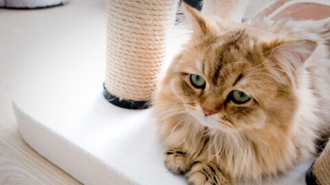6 Signs of Depression in Cats