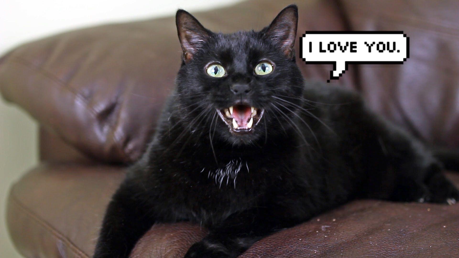 10 Ways Your Cat Says