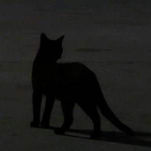 Black cat in darkness