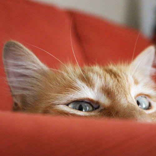 Cat on Orange sofa