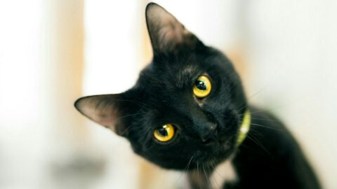 7 Things to Love About Black Cats