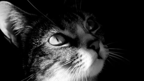 Do Cats Sense Death?