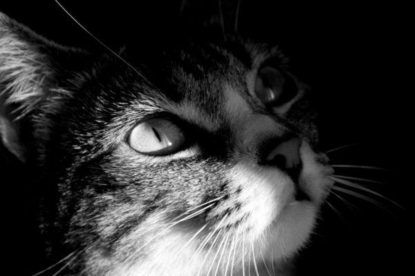 Do cats sense death