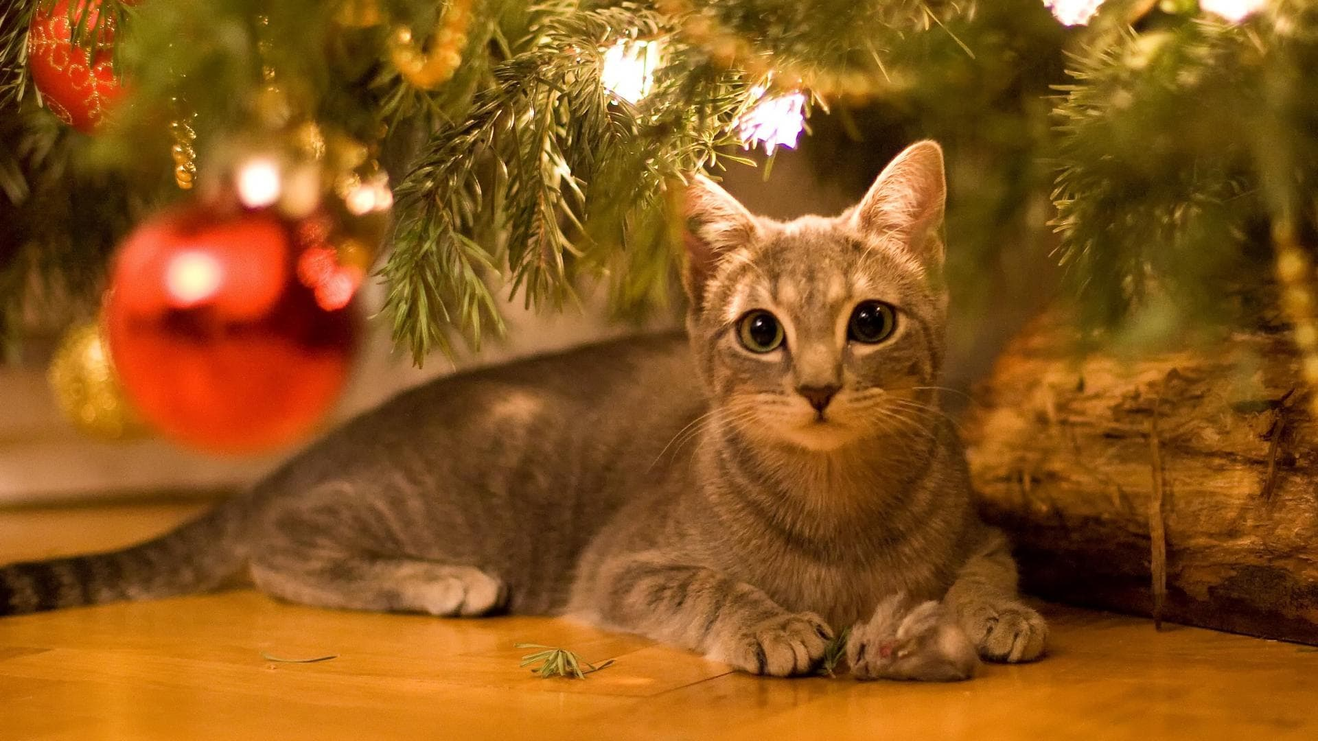 Cat Christmas.A Cat S Guide To Christmas Purrfect Love