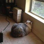 Cat head pressing near window