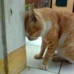 Cat head pressing on building