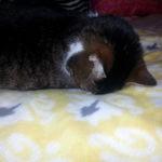 head pressing sleep