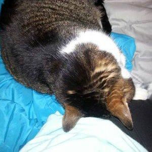 Cat head pressing