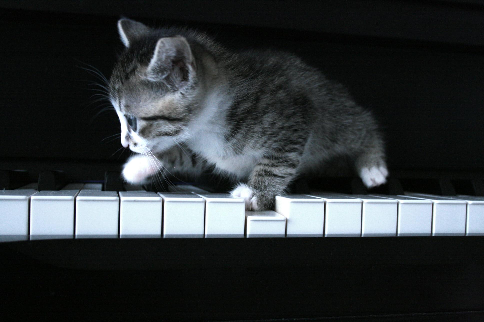 Cat on piano