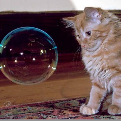 Catnip Bubbles