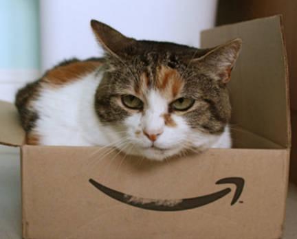 Cardboard box cat toy