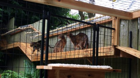 Safety Outdoors – Cat Enclosures & Cages