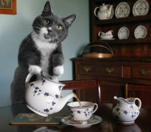 cat pouring tea