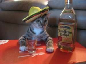 cat with alcohol