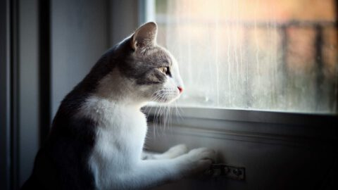 Cats With Separation Anxiety