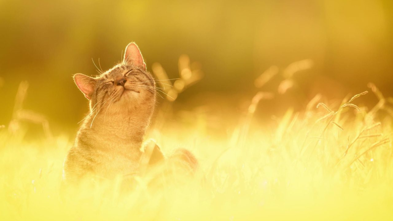 Cat sunshine
