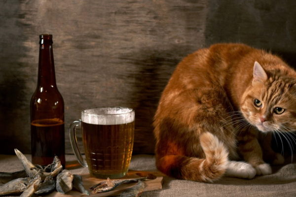 Cat with beer
