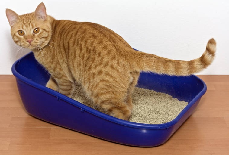 Choosing a litter box