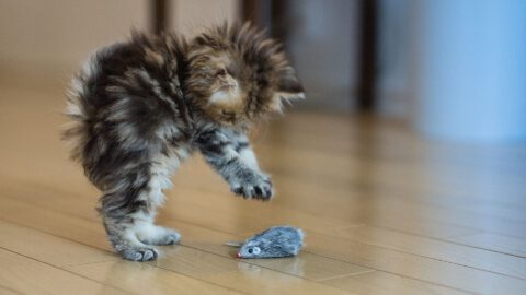 5 Toys Every Cat Needs
