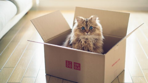 5 Things to Consider Before Getting a Cat