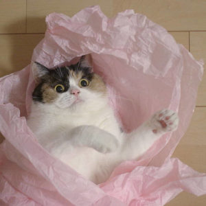 Cat tissue paper toy