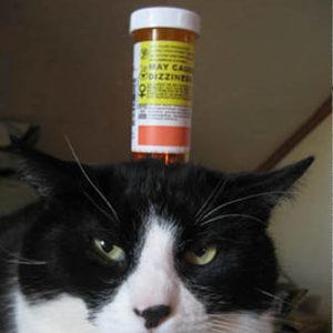 Cat toy empty pill bottle