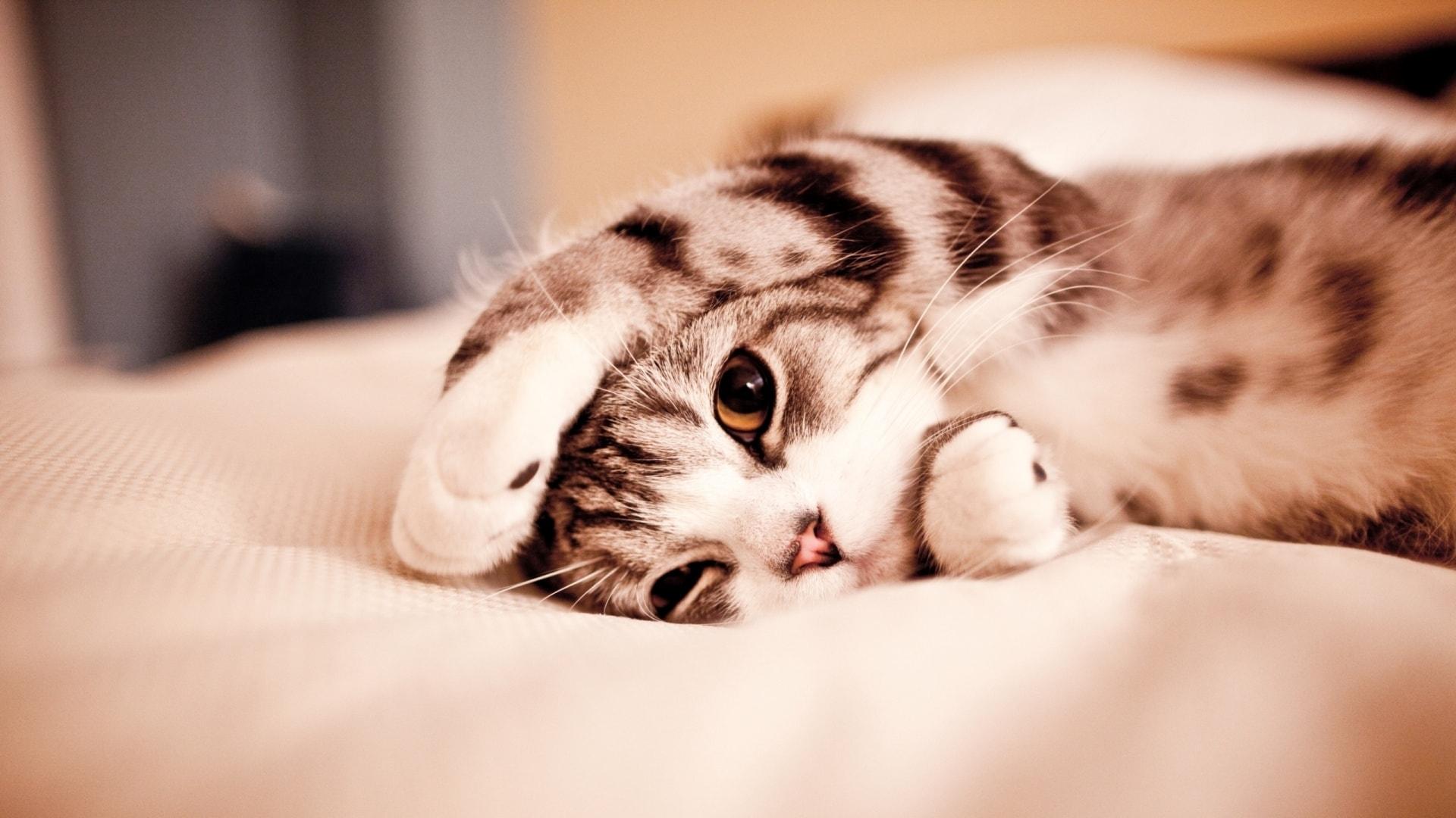 Cat laying