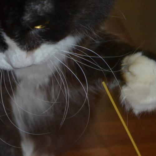 Cat Choking On Dry Food