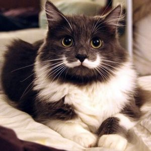 Hamilton the Hipster Cat