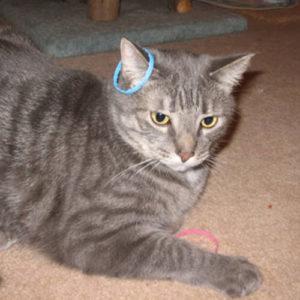 Milk ring cat toy