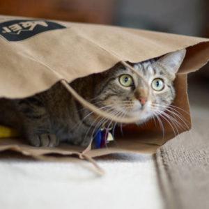 Paper bag cat toy