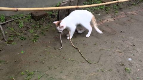 Will a Cat Keep Snakes Away?