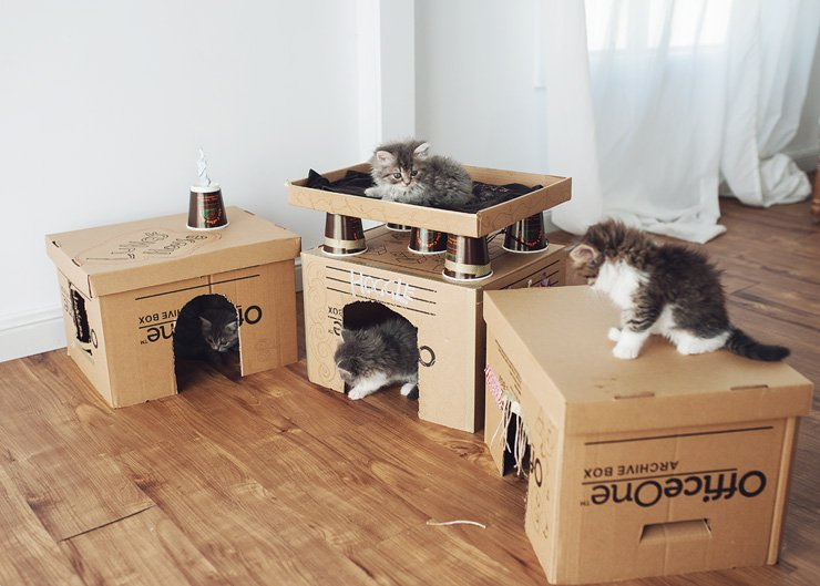 Diy Cardboard Box Homes And Towers For Cats Purrfect Love