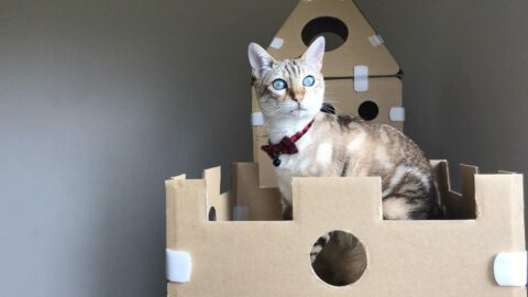 DIY Cardboard Box Homes And Towers For Cats