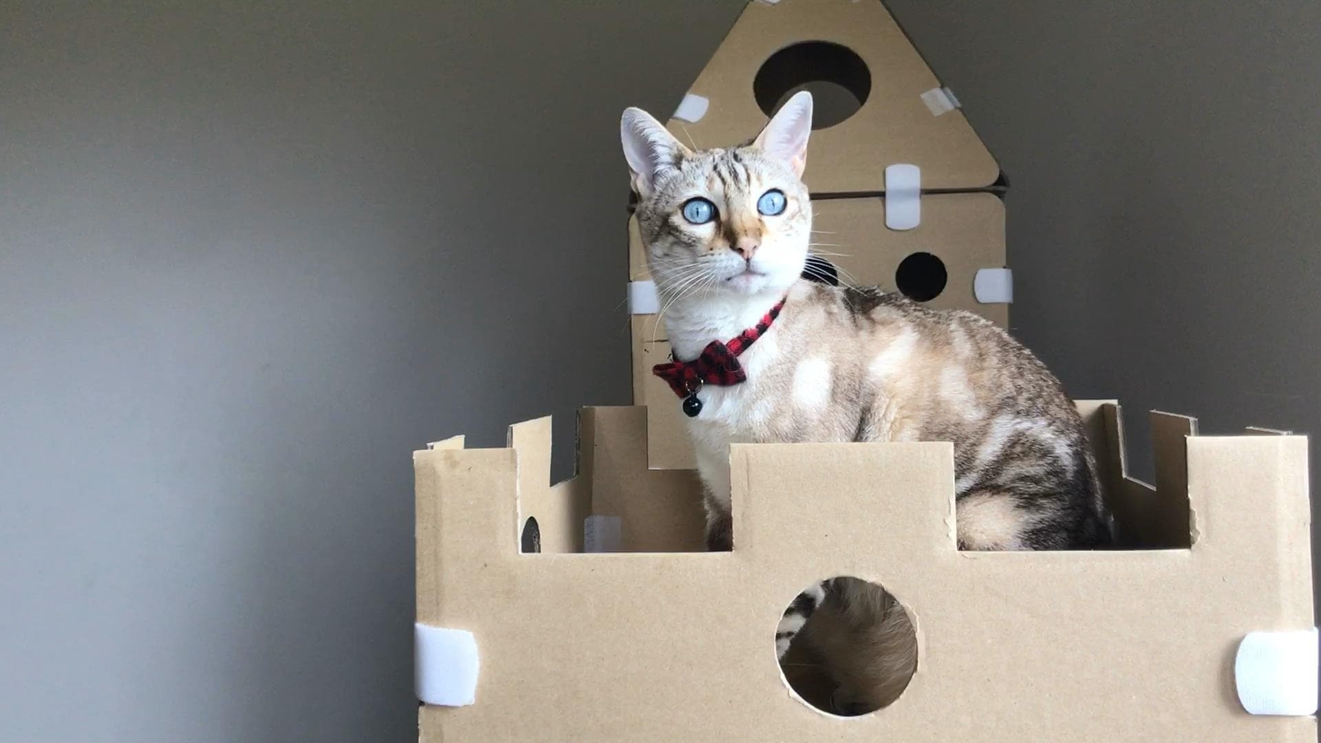 Diy cardboard box homes and towers for cats purrfect love for Castle cat tower