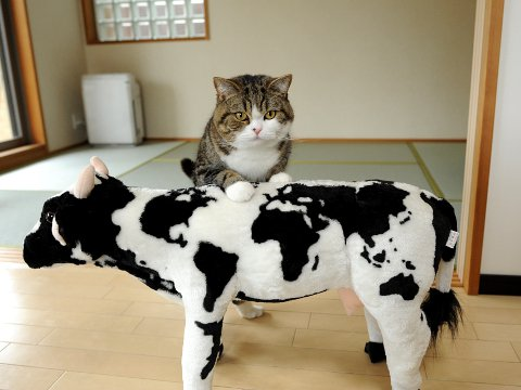 cat and cow plush