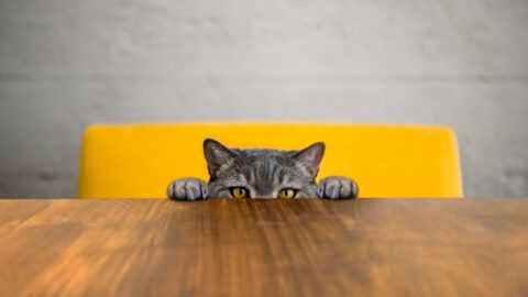 5 Reasons Your Cat Pees on the Floor