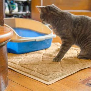 Why Do Cats Pee When Cleaning The Litter Box